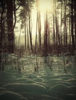 雪に射す光_e0115301_1139312.jpg