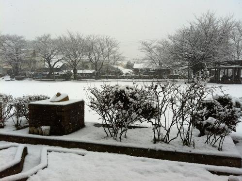 うるう年の雪景色!_a0216706_134630.jpg
