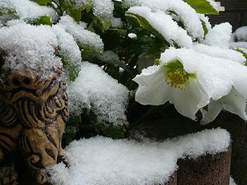 また雪がつもりました_d0020309_9383263.jpg