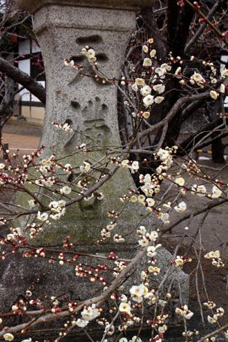 北野天満宮 梅が咲いた_e0048413_21172552.jpg