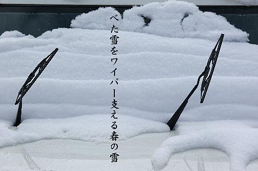 春の雪_e0099713_2163919.jpg