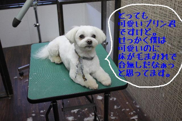 b0130018_2242636.jpg