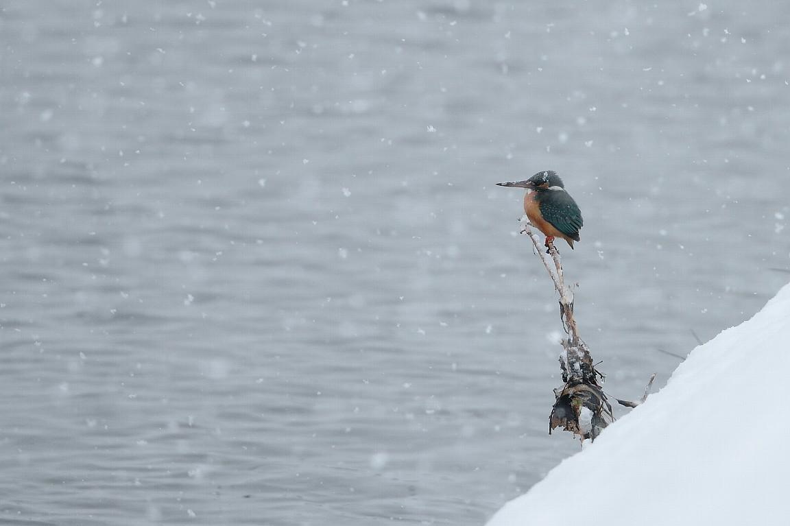 2月29日 (水) 雪 _e0146518_1644120.jpg
