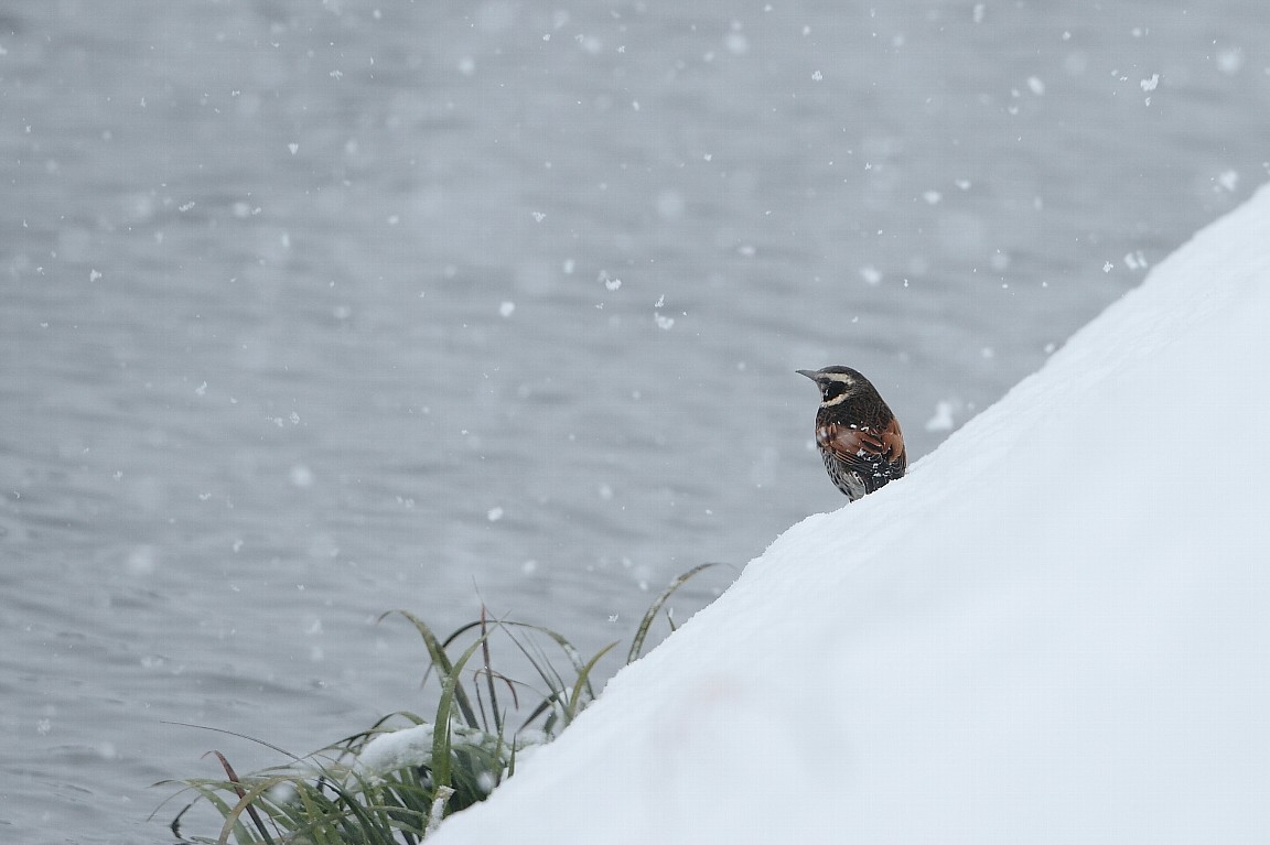 2月29日 (水) 雪 _e0146518_1644498.jpg
