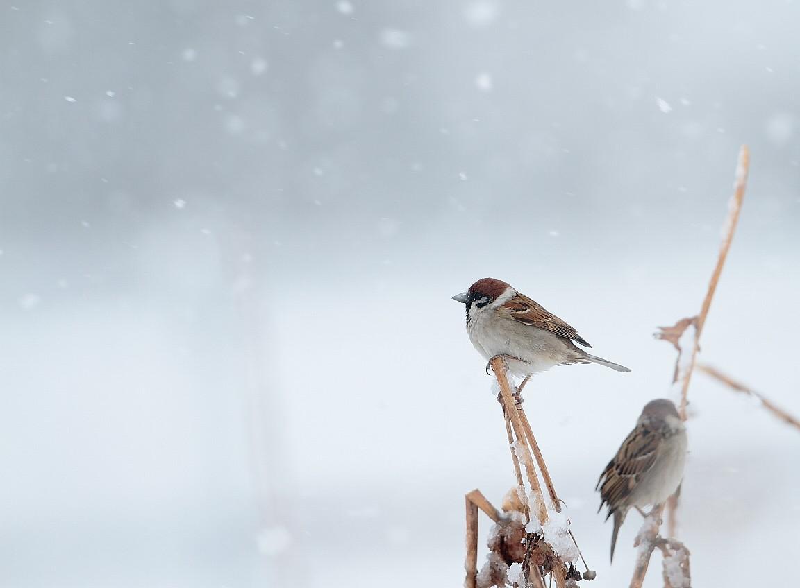 2月29日 (水) 雪 _e0146518_1645485.jpg