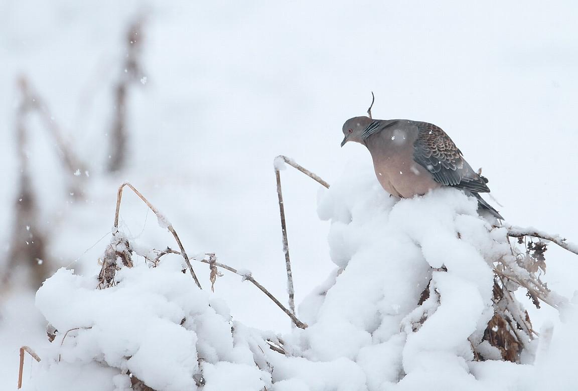 2月29日 (水) 雪 _e0146518_1645770.jpg