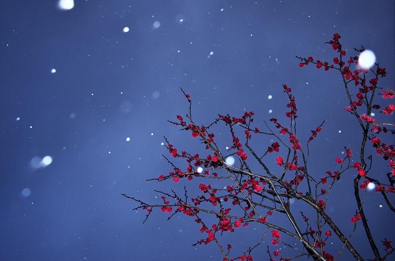 雪中梅_a0204724_855569.jpg