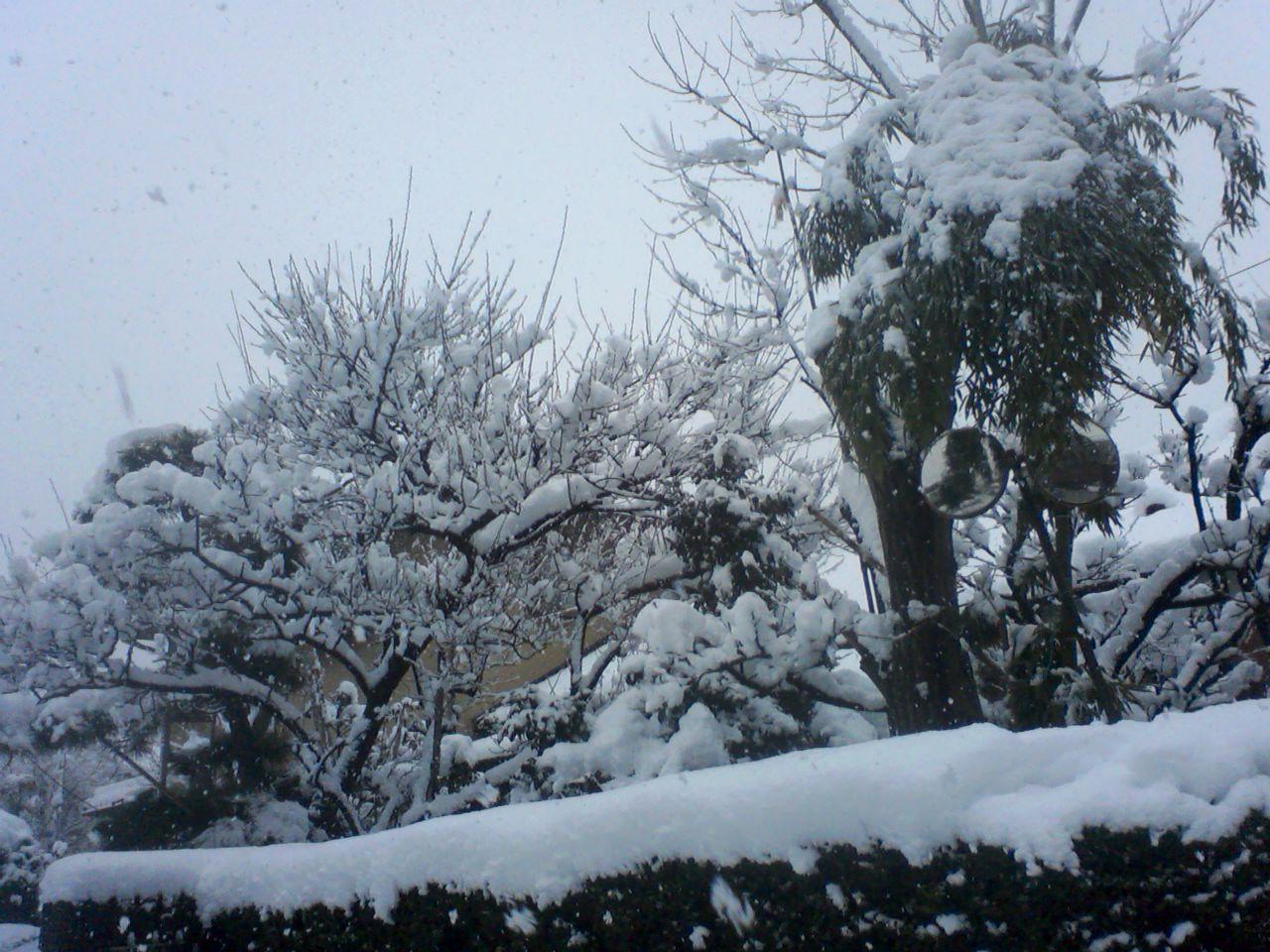 東京は大雪!_a0088827_12115881.jpg