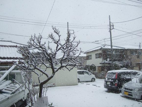 複雑な2月29日....大雪です。_b0137932_10493485.jpg