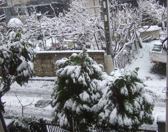 複雑な2月29日....大雪です。_b0137932_10502823.jpg