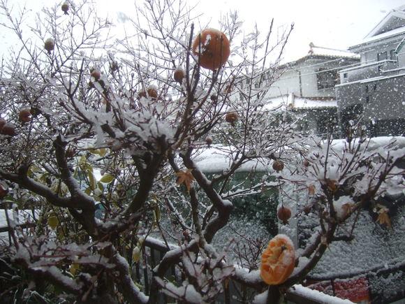 複雑な2月29日....大雪です。_b0137932_1051198.jpg