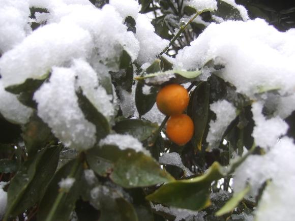 複雑な2月29日....大雪です。_b0137932_10515366.jpg