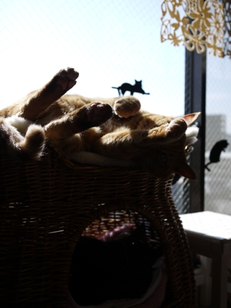 サボる猫 しぇる編。_a0143140_2336593.jpg