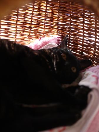 サボる猫 しぇる編。_a0143140_23391526.jpg