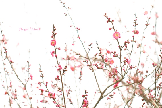 春眠_d0147742_2343487.jpg