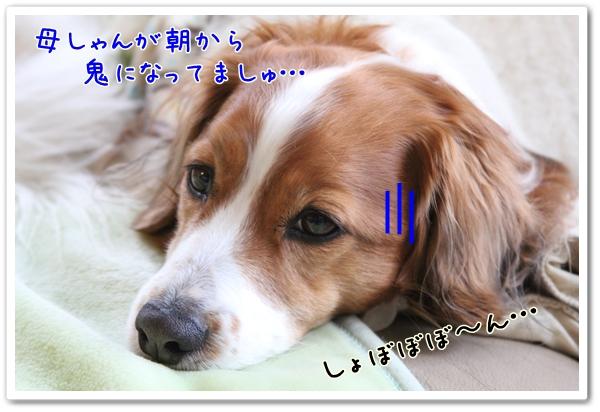 d0013149_1232585.jpg