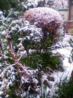 雪、よく降るな~_f0138653_10385486.jpg