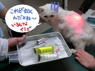 ユキちゃん☆_b0059154_1941984.jpg