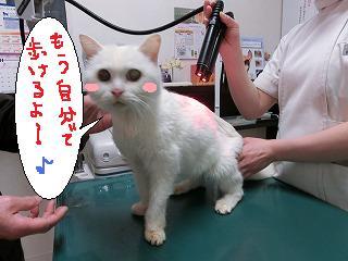 ユキちゃん☆_b0059154_1992114.jpg