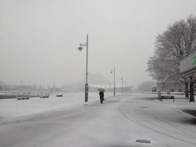 雪の朝_b0031055_7424829.jpg
