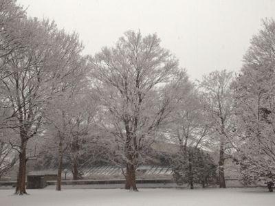 雪の朝_b0031055_7424942.jpg