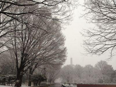 雪の朝_b0031055_7425135.jpg