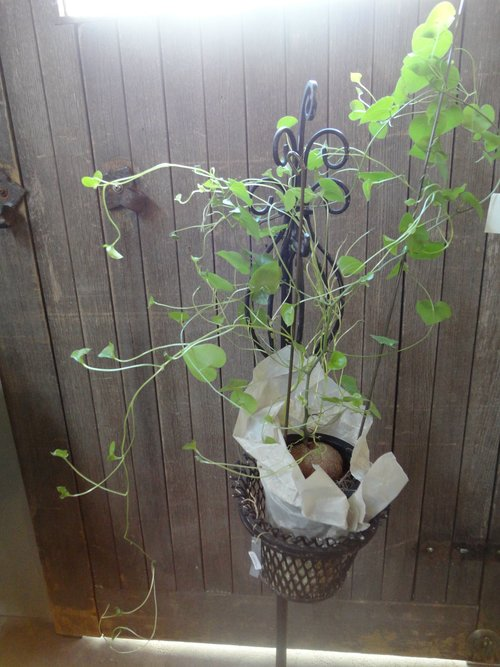 plants_d0162257_2161748.jpg