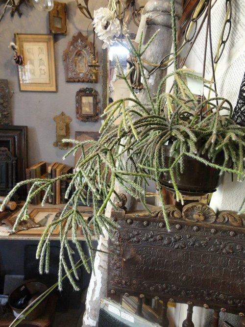 plants_d0162257_217072.jpg