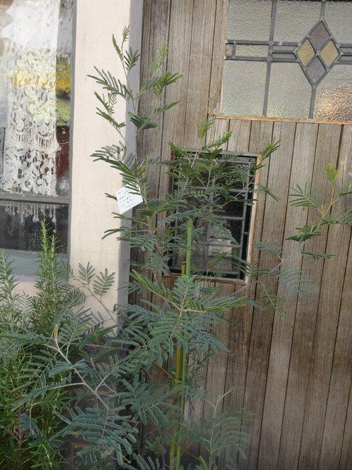 plants_d0162257_2171422.jpg