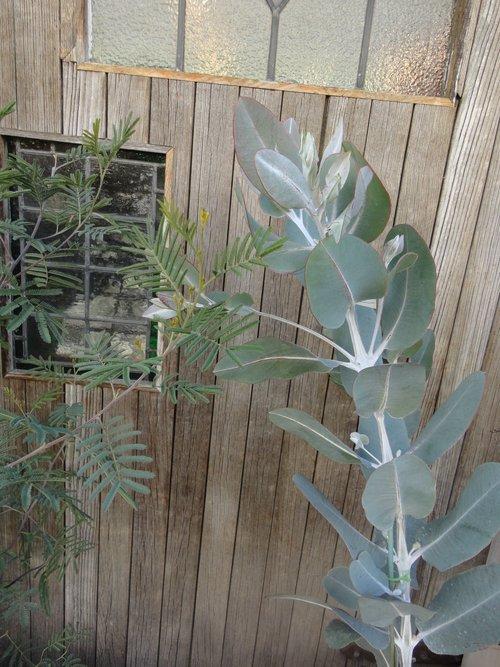 plants_d0162257_2172739.jpg