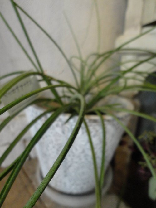 plants_d0162257_2181091.jpg