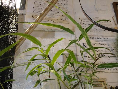 plants_d0162257_218374.jpg