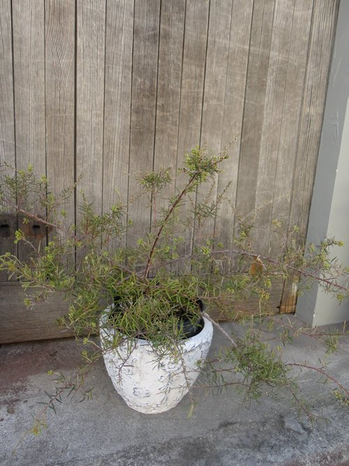 plants_d0162257_218511.jpg