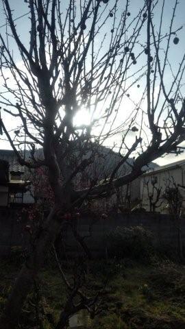 Sunlight through an apple tree_c0157558_9172741.jpg
