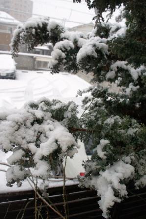 大雪_a0163160_22392258.jpg