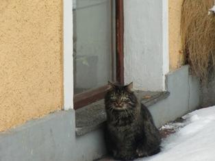 猫と鳥@ハルシュタット_f0178060_2211695.jpg
