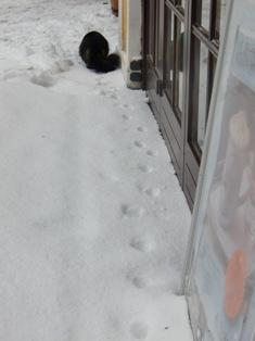 猫と鳥@ハルシュタット_f0178060_2213217.jpg