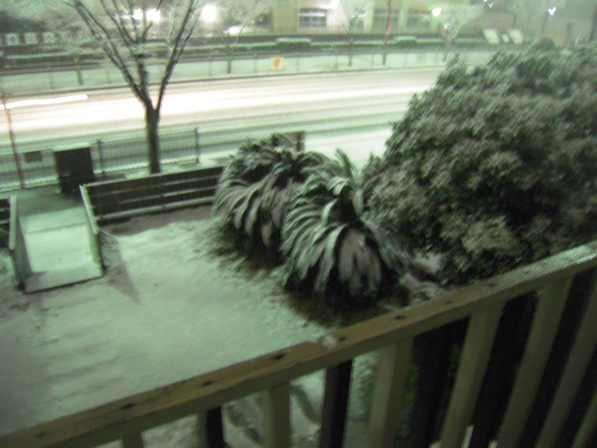 Snow_d0076864_949382.jpg