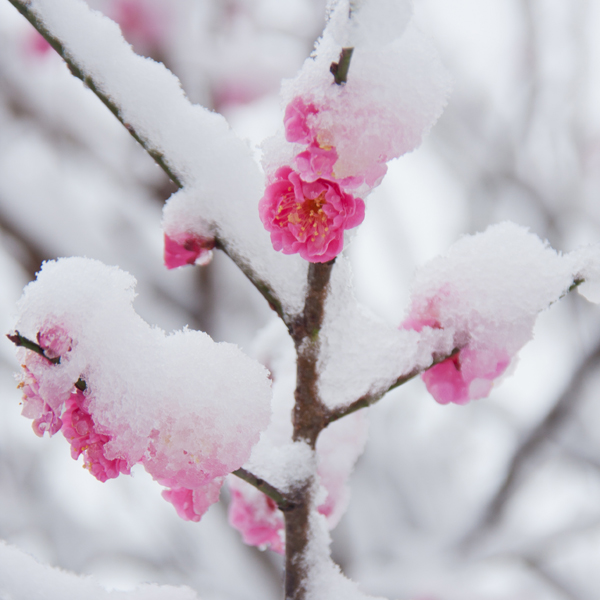 雪景色。_b0022268_21211059.jpg