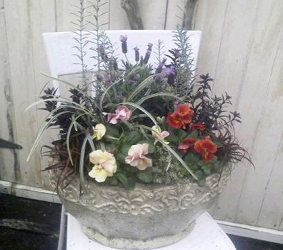 八重咲きパンジー・ビオラ  フェアリーチュール_b0137969_17314525.jpg