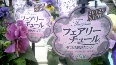 八重咲きパンジー・ビオラ  フェアリーチュール_b0137969_17363685.jpg