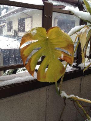 東京に雪_d0074474_20573495.jpg