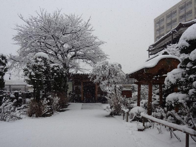 雪_e0187286_10125246.jpg