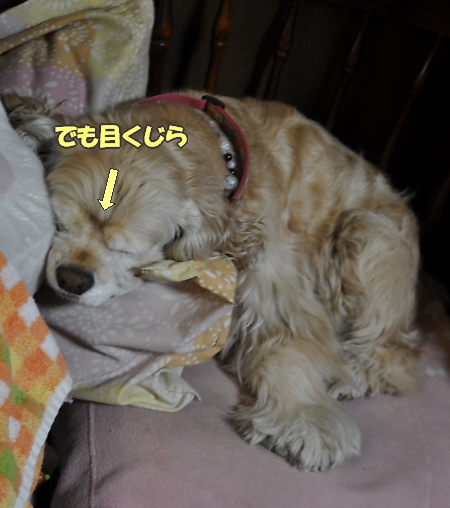 b0067012_12511100.jpg