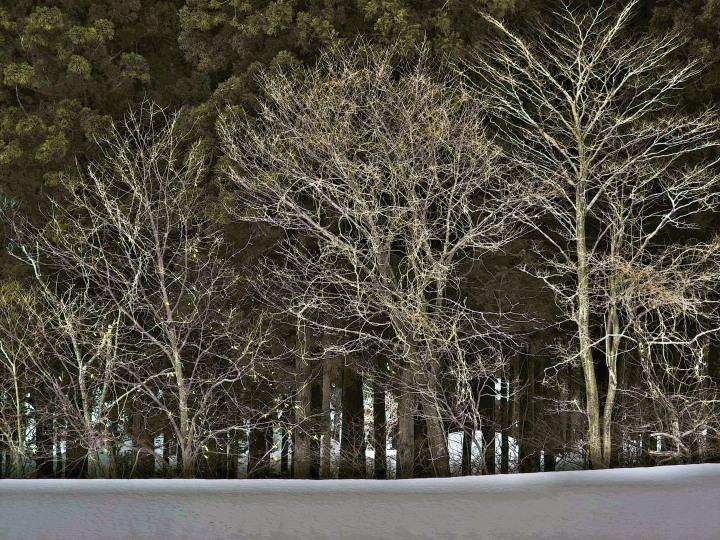 雪原の林_e0169421_20362223.jpg