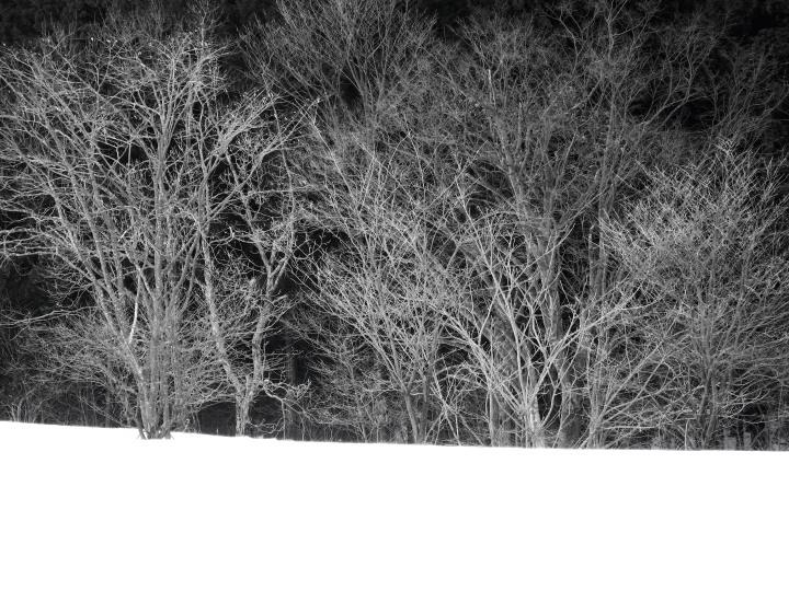 雪原の林_e0169421_20363031.jpg