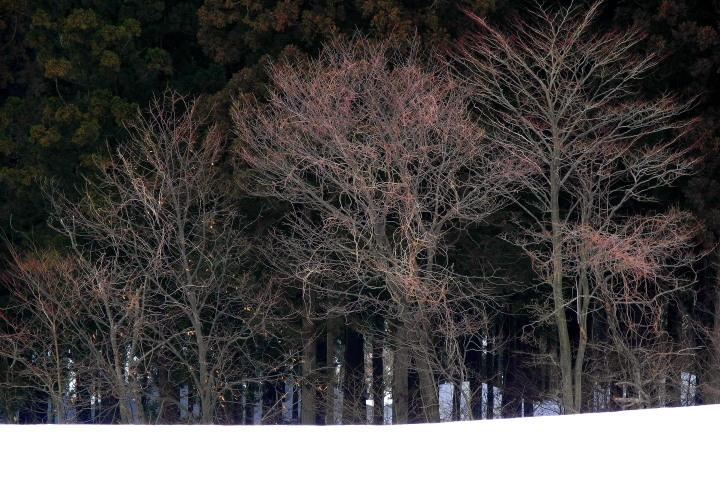 雪原の林_e0169421_2036919.jpg