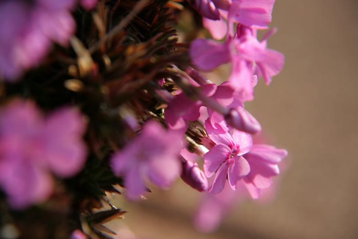 小さなピンク色_c0120834_836359.jpg