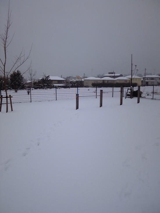 雪遊び!_f0214534_828458.jpg