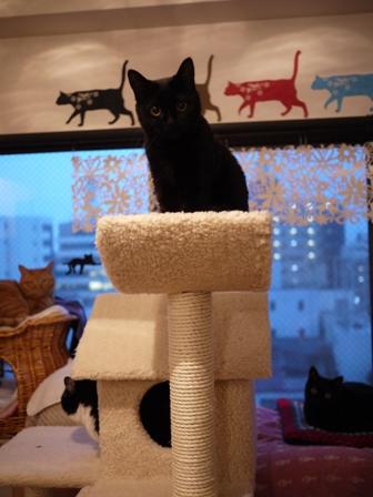 ふわふわ三角屋根おうちキャットタワー猫 空しぇるのぇるろった編。_a0143140_21272379.jpg